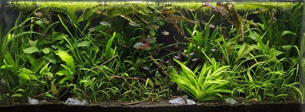 Jungle-style-fish-tank-idea