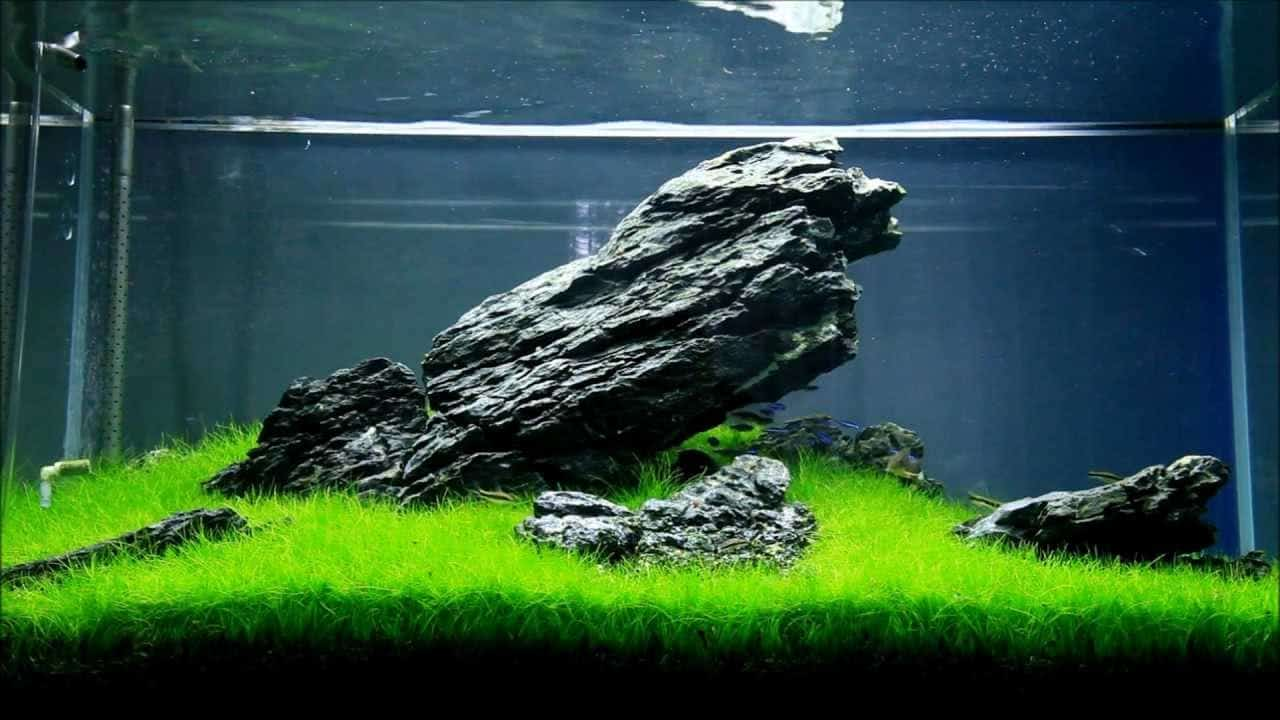 How to Setup a Freshwater Shrimp Tank