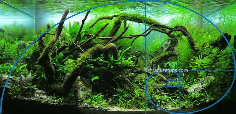 aquascaping-golden-ratio