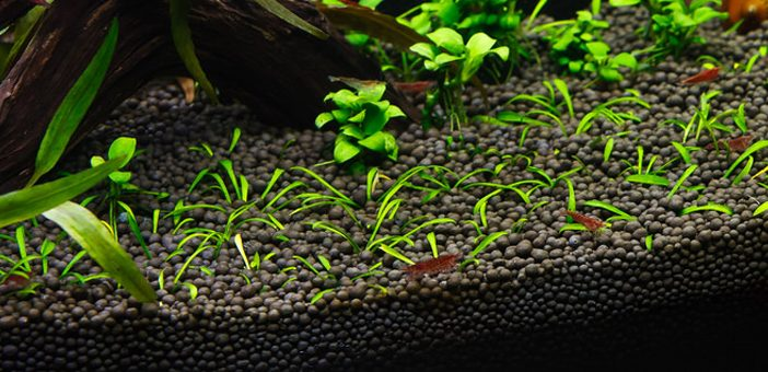 best-substrate-for-planted-aquariums