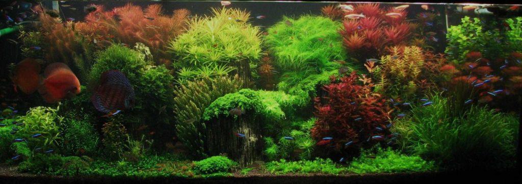 dutch-fish-tank-aquascape-idea