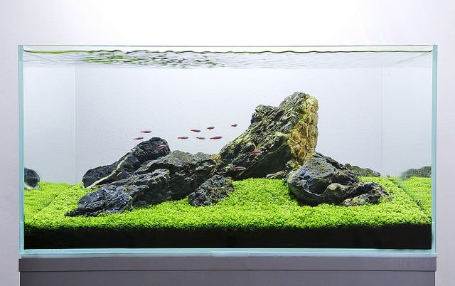 iwagumi-aquascaping-ideas
