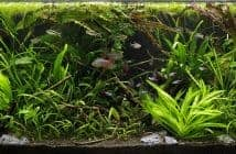 jungle-style-aquascaping