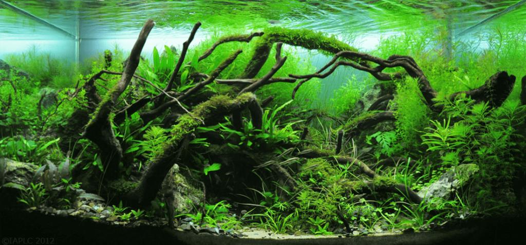 nature-style-aquascape-idea