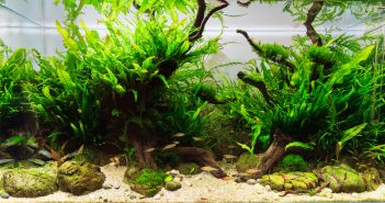 planted-aquascaping-styles