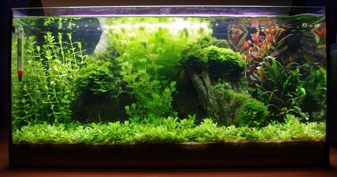 walstad-fish-tank