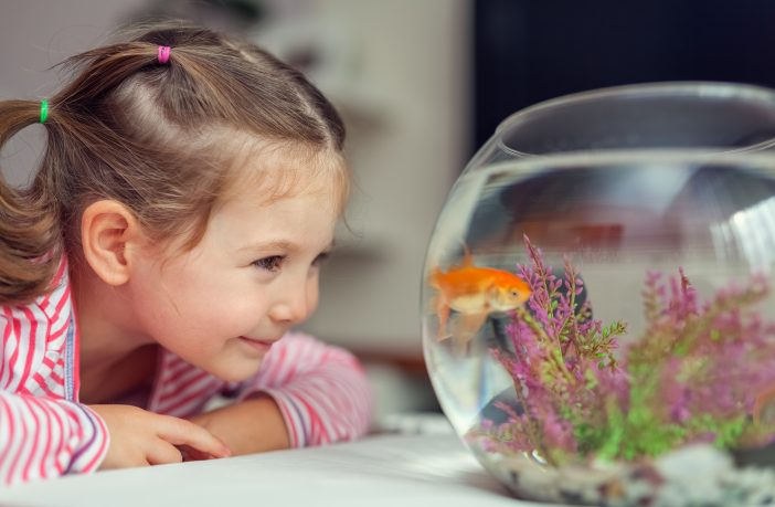 Best aquariums for kids and the benefits of fish tanks for for Best fish to have as pets