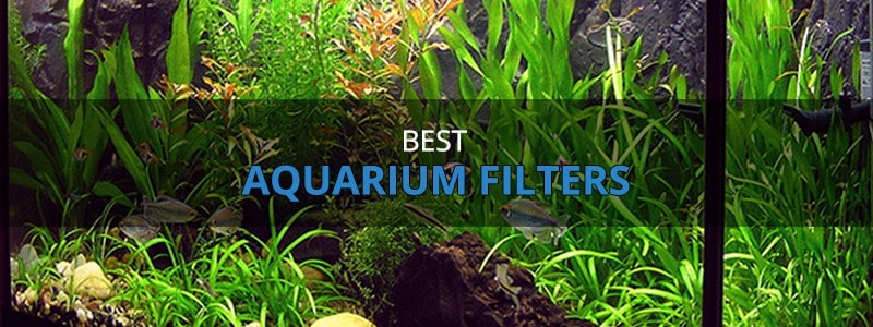 Best Aquarium Filters – Reviews & Buyer's Guide