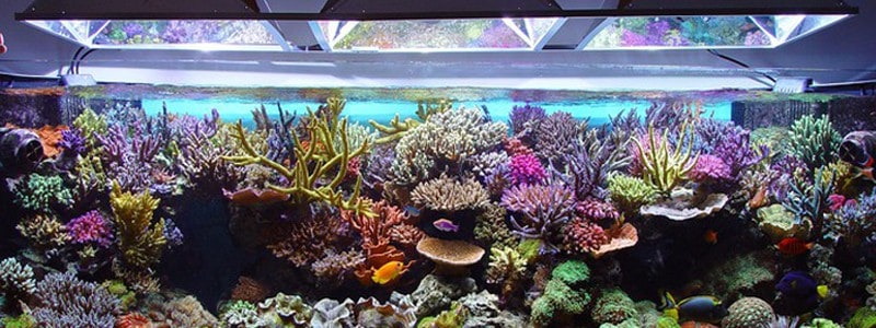 Choosing Aquarium LED Lighting for Coral Reef Tanks : led reef tank lighting - azcodes.com