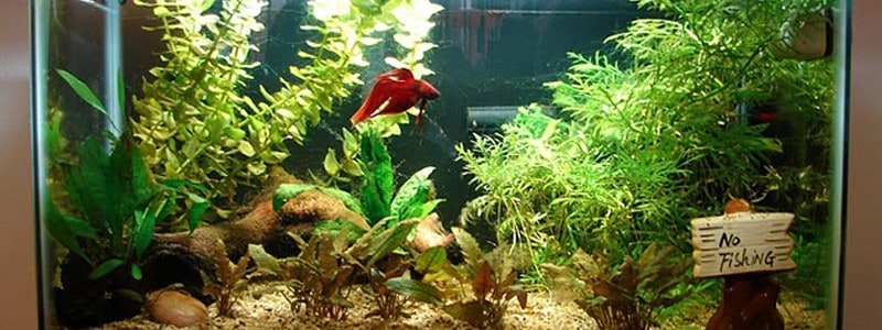 Best Small Aquarium Filters