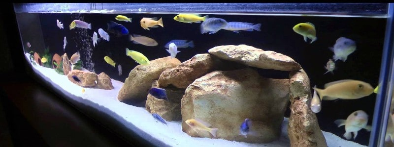 Image result for cichlid food