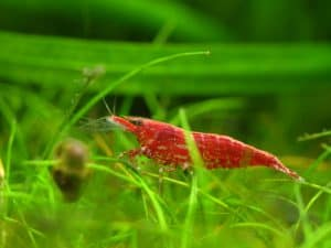 shrimp-tank-substrate