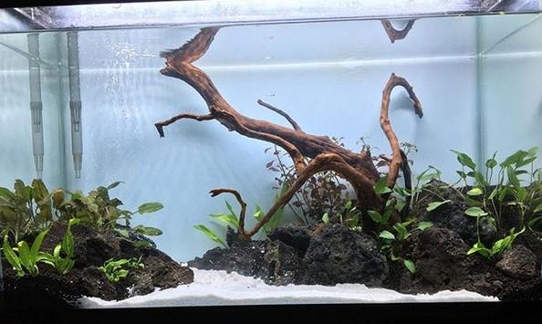 30-gallon-shrimp-tank