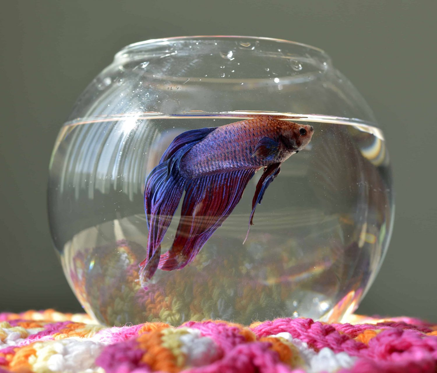 betta-fish-tank-size