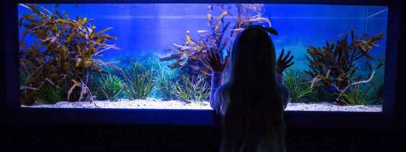 aquarium-battery-backup