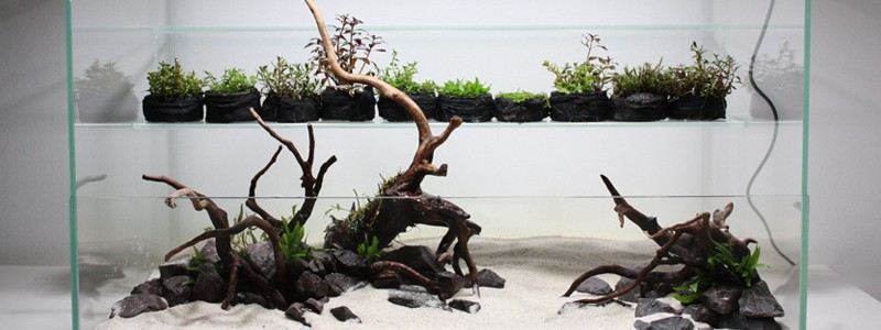 types-of-aquarium-driftwood