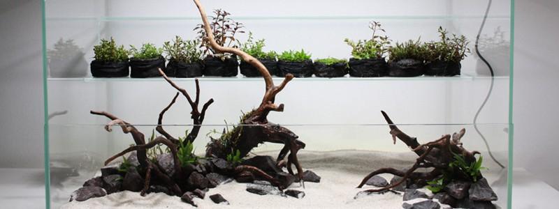 types-of-aquarium-driftwood