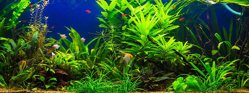 can-aquarium-plants-grow-in-gravel