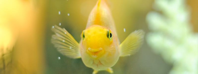 do-fish-have-personalities