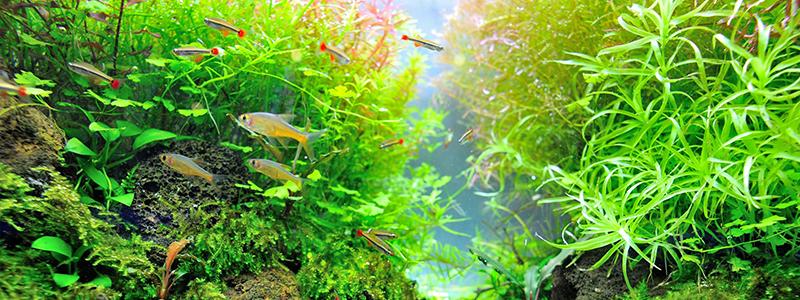 125-and-150-gallon-aquarium-lighting