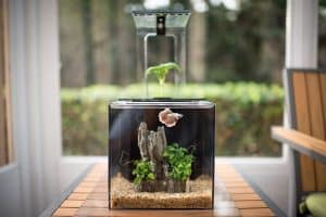 ecoqube-aquarium-kit