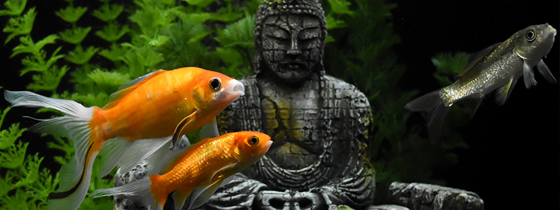 zen-fish-tank-for-depression