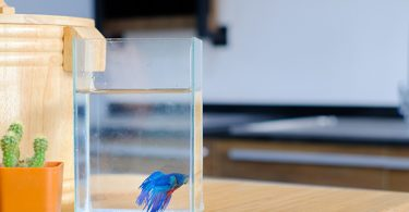 can-betta-fish-live-in-tap-water