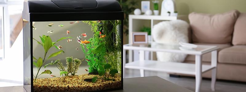 can-you-turn-off-an-aquarium-filter-at-night