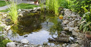 how-deep-does-a-fish-pond-need-to-be