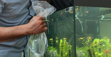 how-often-can-I-add-fish-to-my-aquarium