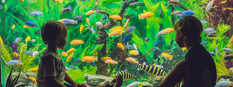 benefits-of-fish-tanks-for-kids