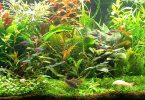can-an-aquarium-have-too-many-plants
