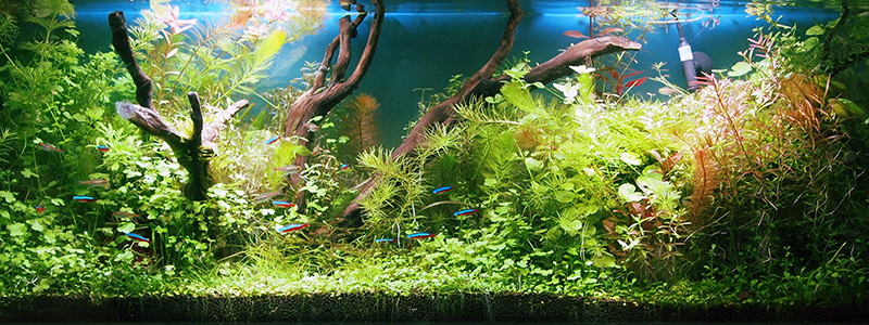 how-many-hours-of-light-do-aquarium-plants-need-per-day