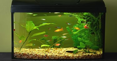 fish-tank-is-too-small