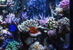 water-flow-in-a-reef-tank