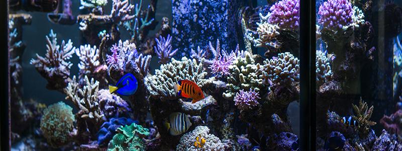 water-flow-in-a-reef-tank