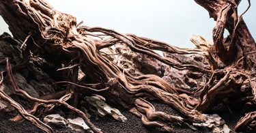 where-does-aquarium-driftwood-come-from